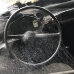 7 Tips to Help You Get a Spider out of Your Car