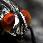 7 Tips: How to Get Rid of Flies in the House Quickly