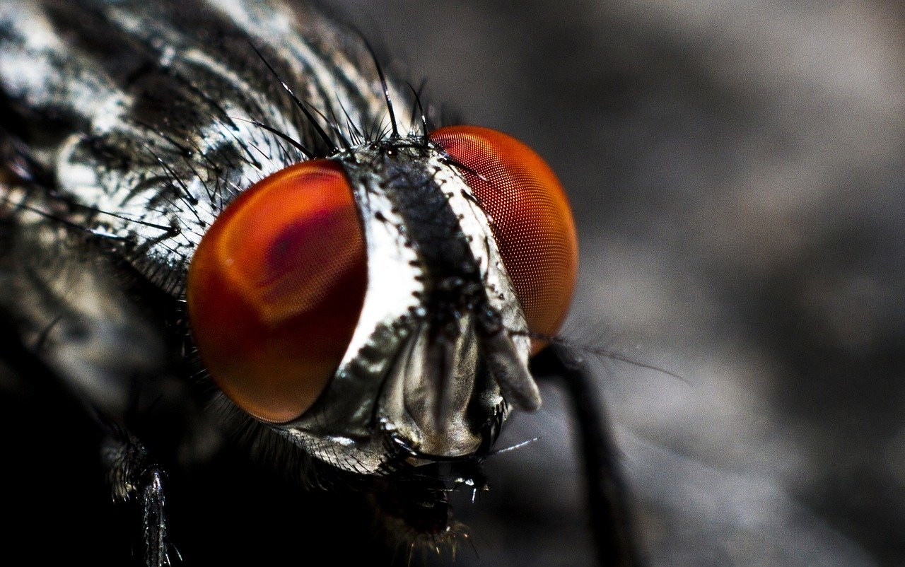 Get Rid of Flies in the House Quickly
