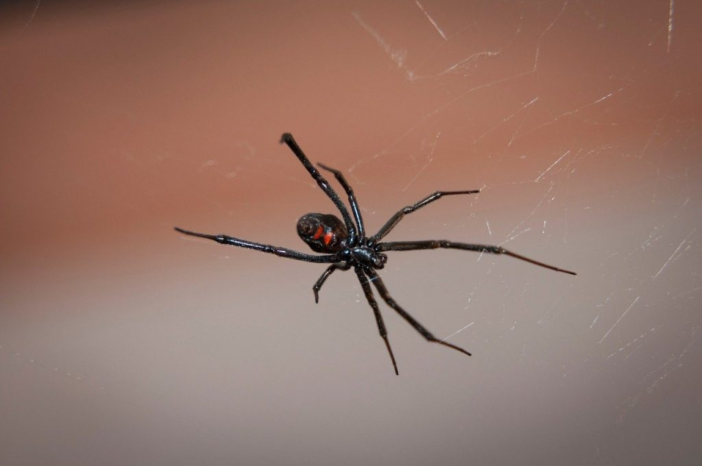 why do I have spiders in my garage