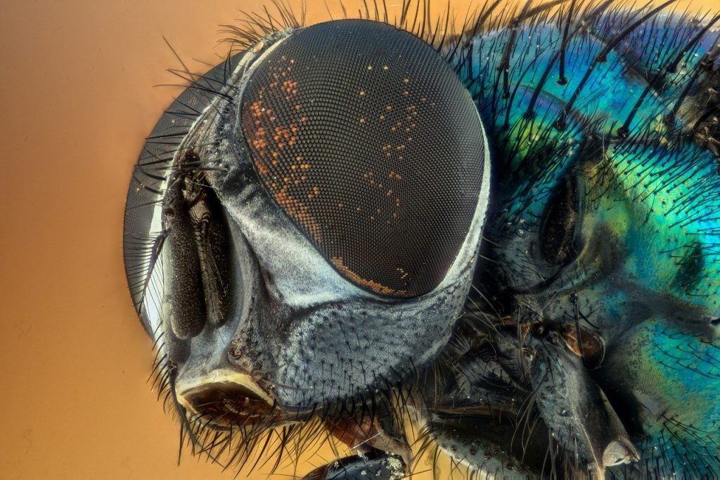 why flies in the kitchen