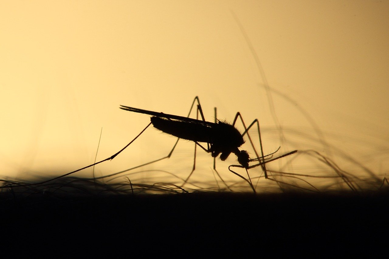 How to Reduce Mosquitoes in Yard