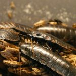 What Attracts Cockroaches In Your House?