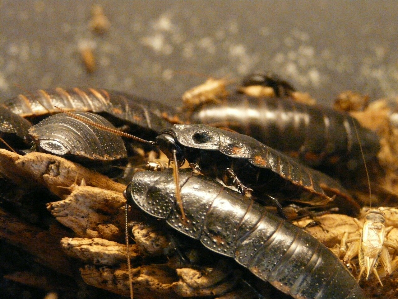 What Attracts Cockroaches In Your House