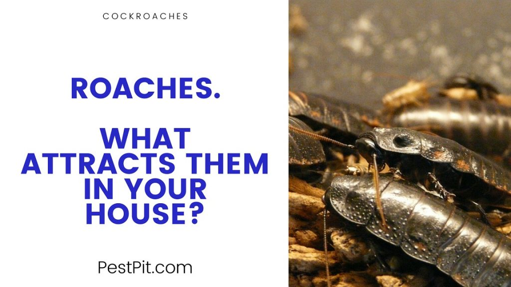 What Attracts them In Your House