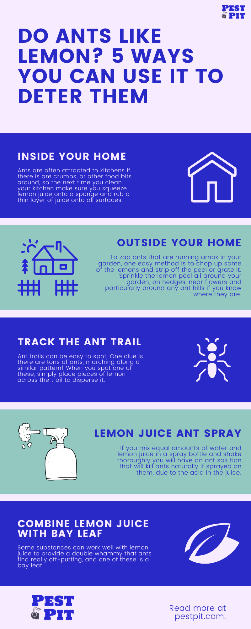 Do Ants Like Lemon_ 5 Ways You Can Use It To Deter Them
