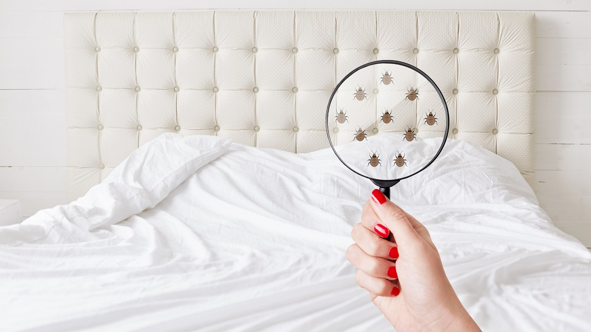 Do Bed Bugs Hate Lavender