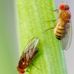 How To Get Rid Of Fruit Flies In A Bar - 5 Tips