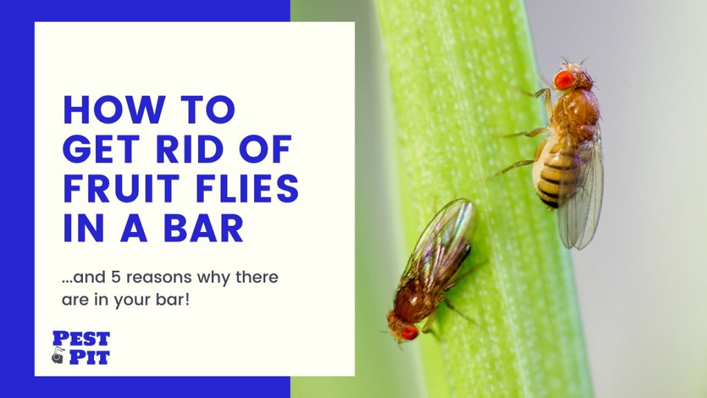 How To Get Rid Of Fruit Flies In A Bar