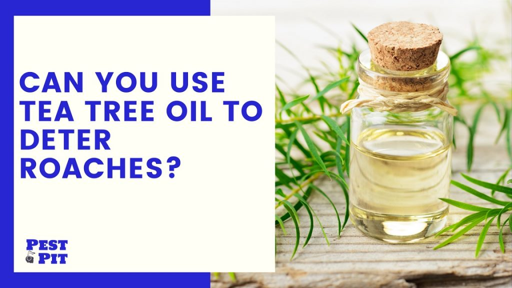 Can You Use Tea Tree Oil To Deter Roaches