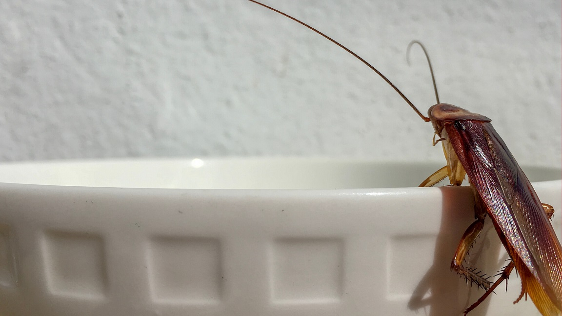roach on a cup
