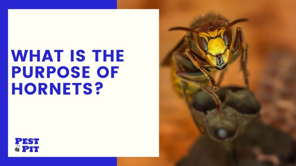 What Is The Purpose Of Hornets 5