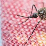 Why Are There So Many Gnats In My House? 7 Reasons