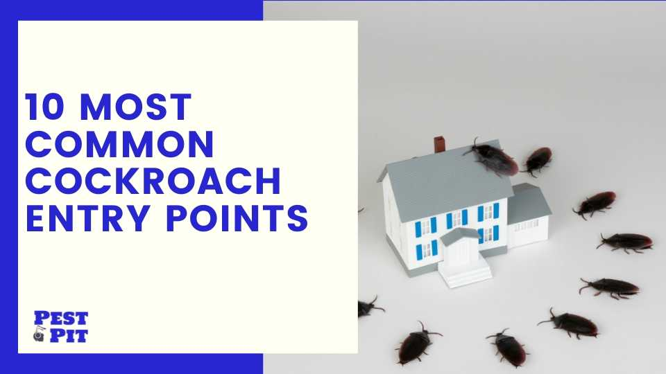 10 Most Common Cockroach Entry Points