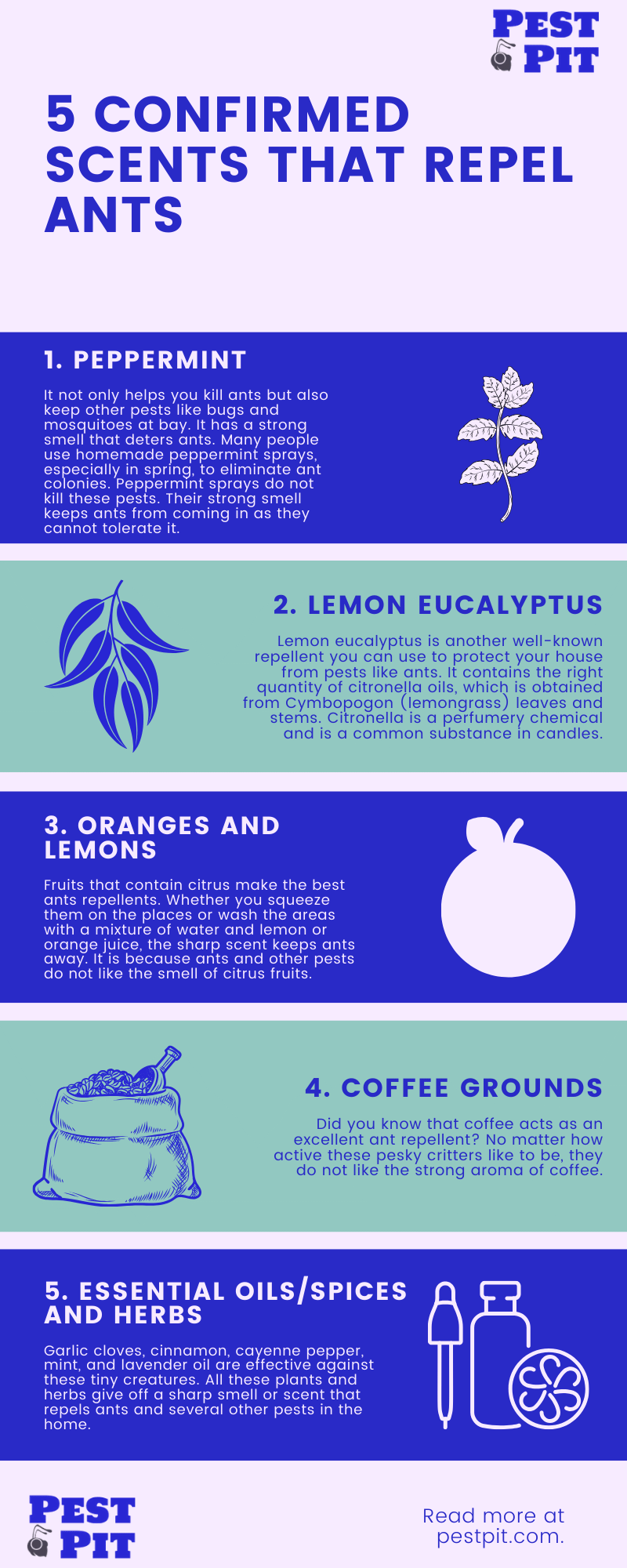 5 Confirmed Scents That Repel Ants Infographic