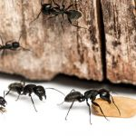 5 Ways To Use Bleach To Kill Ants
