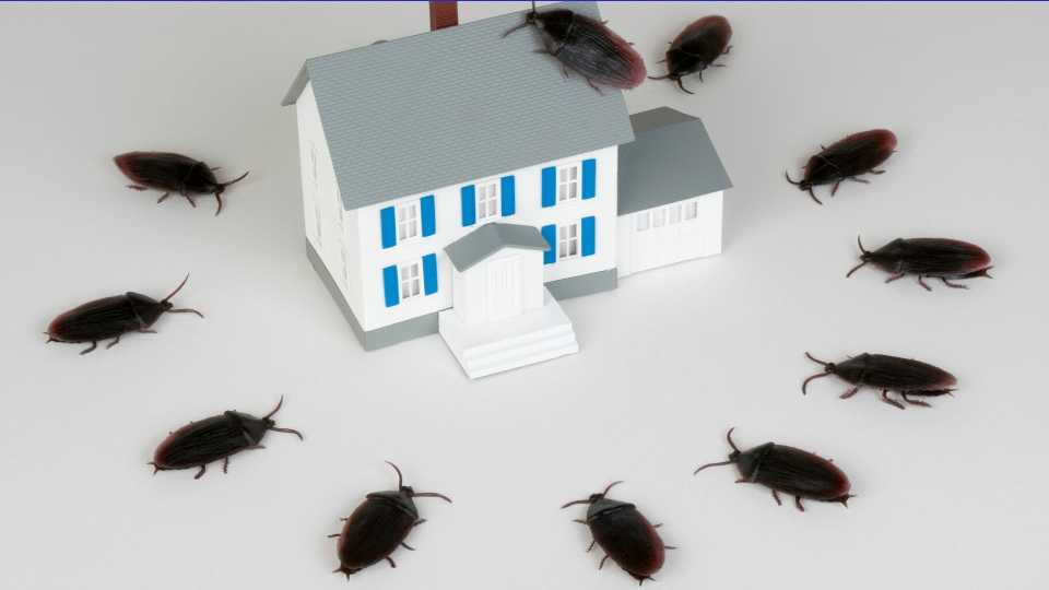 Cockroach Entry Points how do roaches get in your house