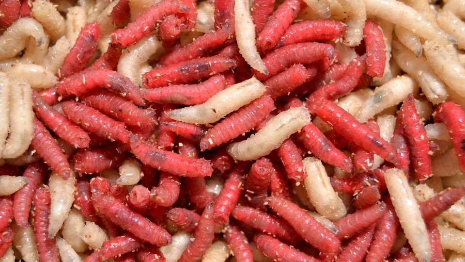 Get Rid Of Maggots In Your Trash Can