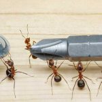 7 Household Items That Kill Ants