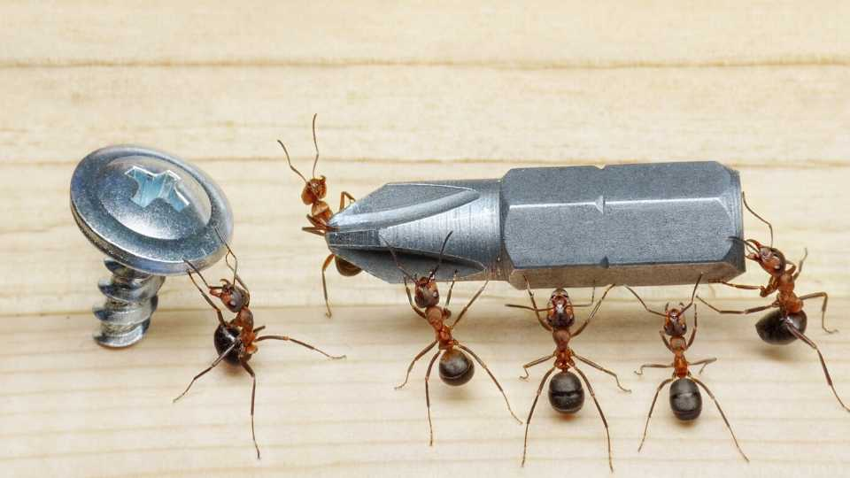 Household Items That Kill Ants
