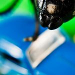 How To Get Rid Of Sugar Ants In Your Car - 5 Steps