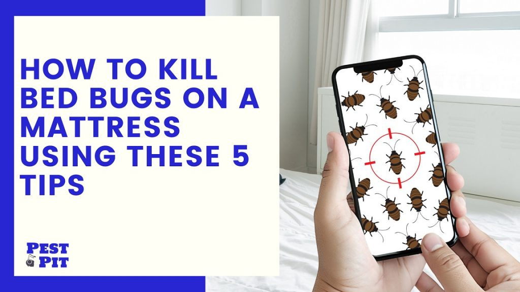 How To Kill Bed Bugs on a Mattress Using These 5 Tips