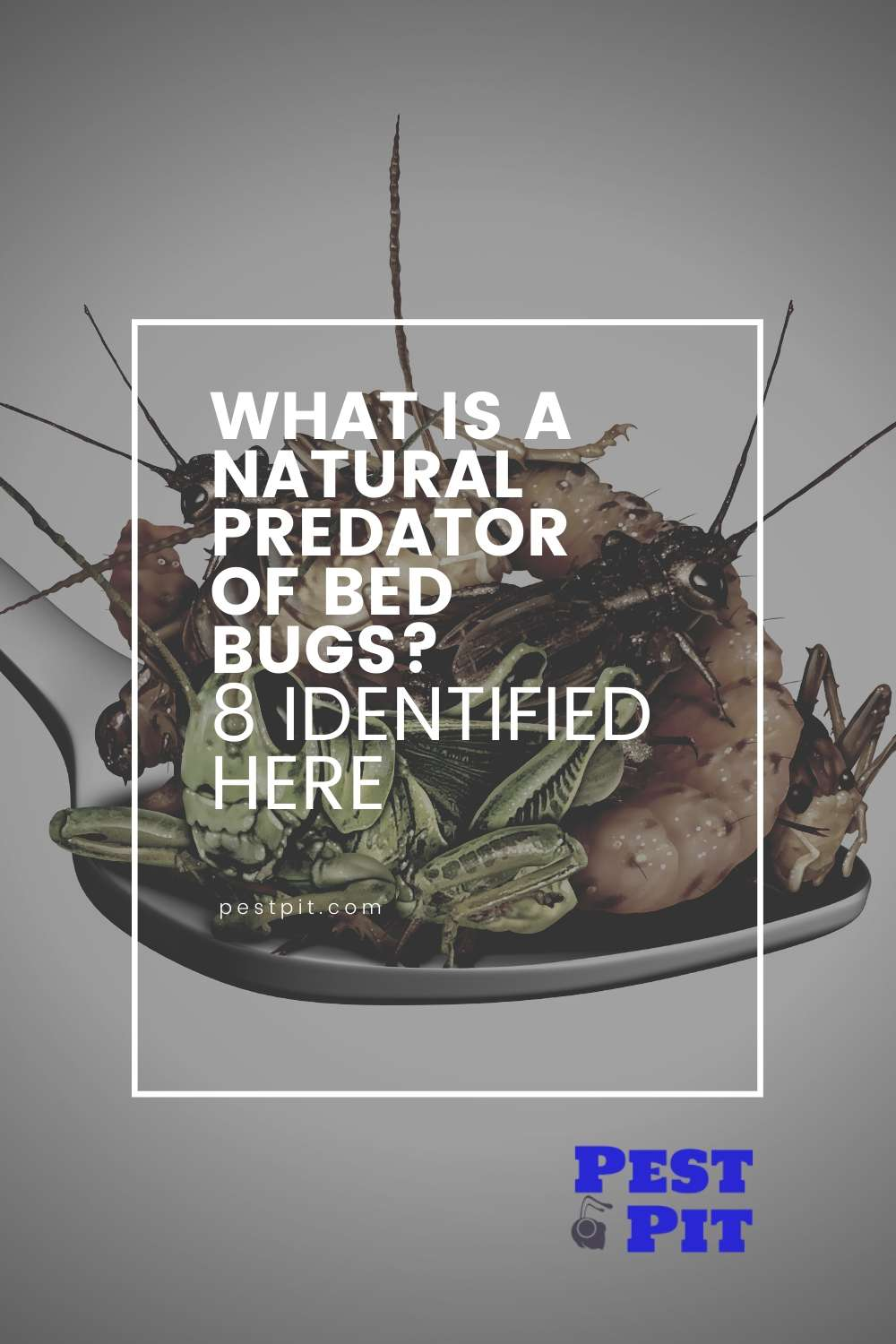 What Is A Natural Predator Of Bed Bugs