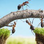 5 Ways To Use Vinegar To Get Rid Of Ants