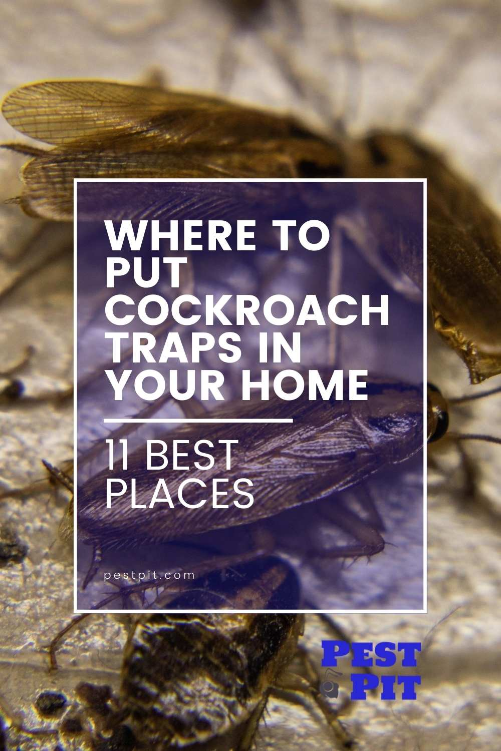 Where to Put Cockroach Traps in Your Home