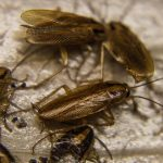 Where to Put Cockroach Traps in Your Home - 11 Places