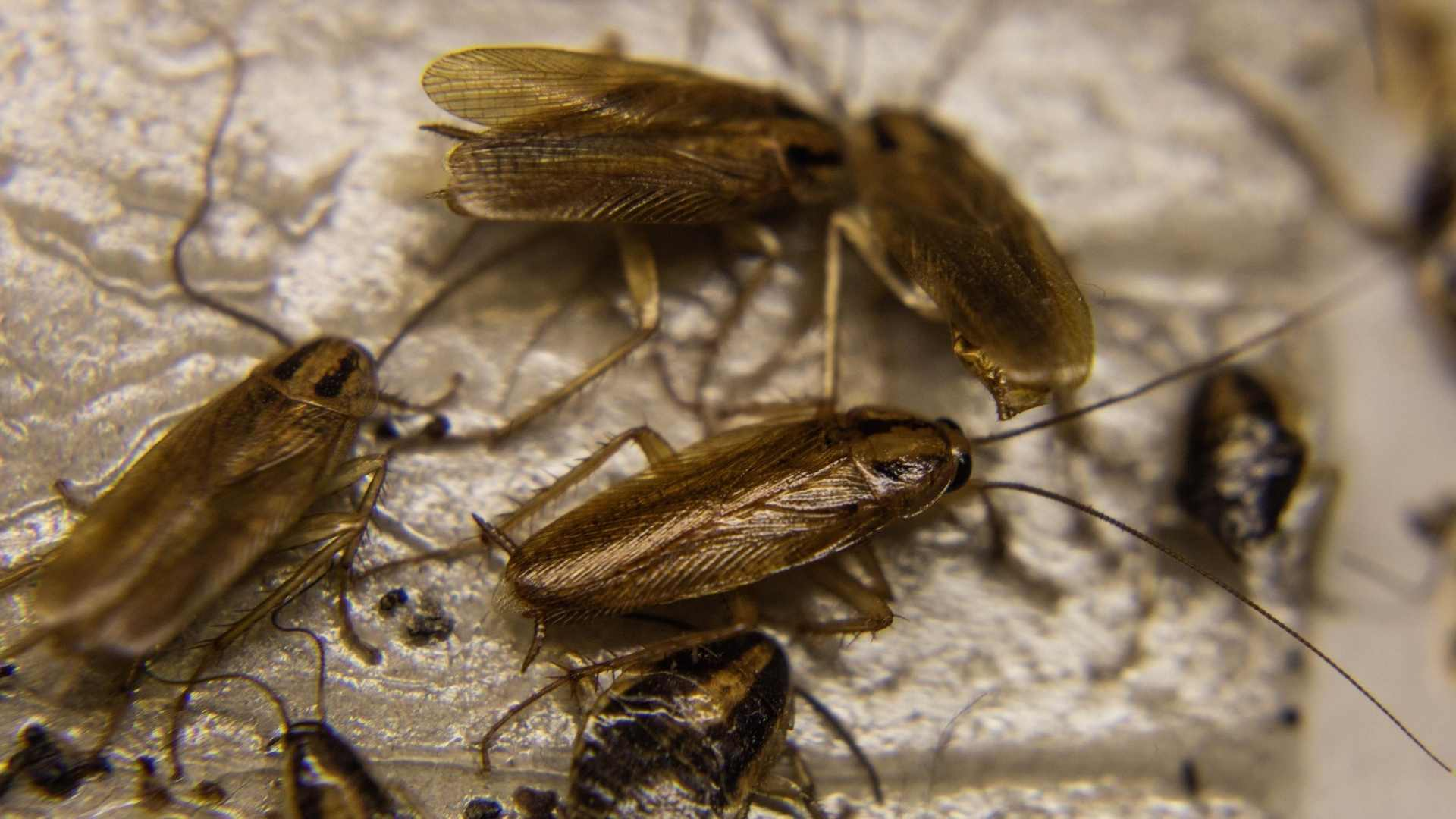 where to put roach traps in your home