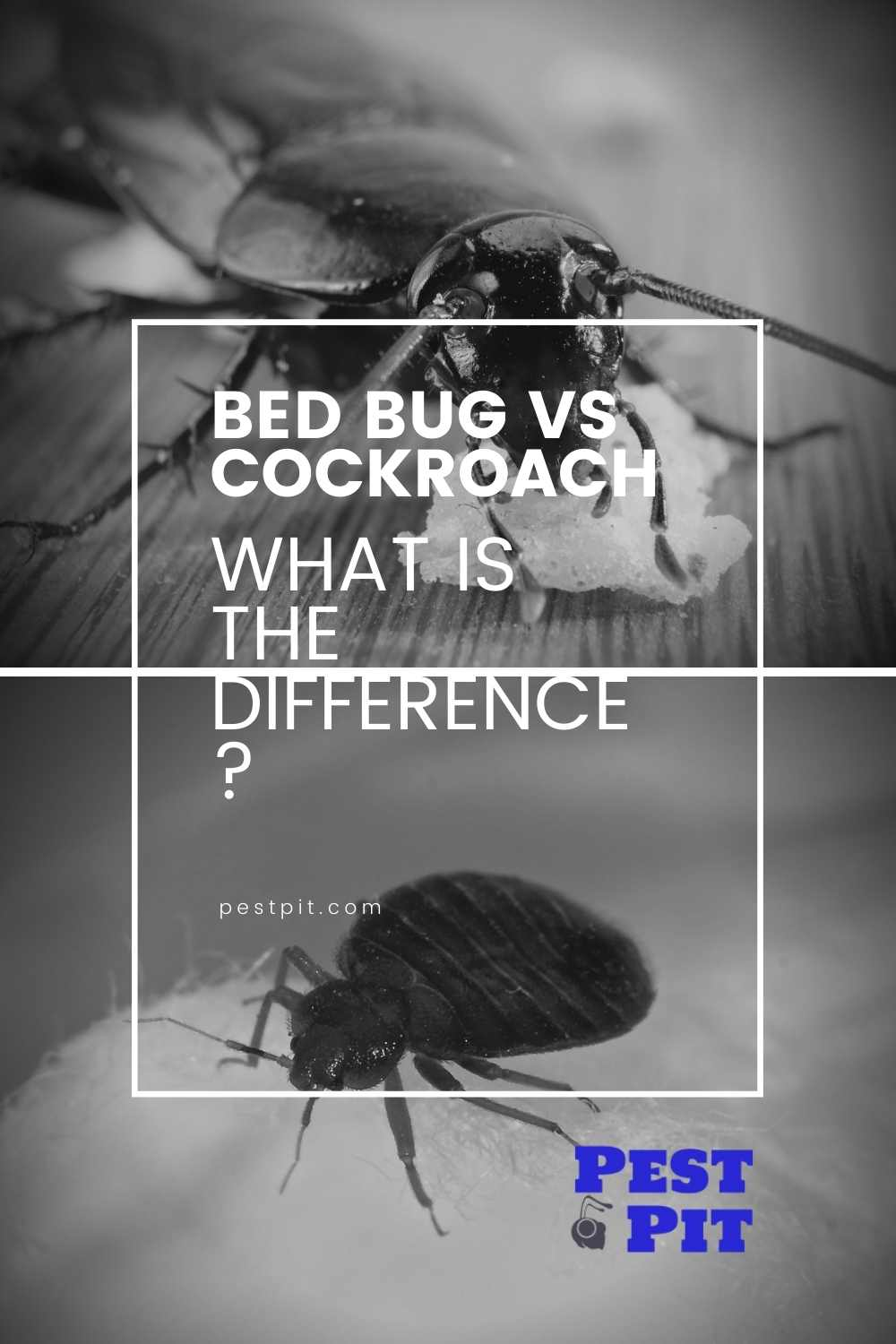 Roach v bed bugs the difference