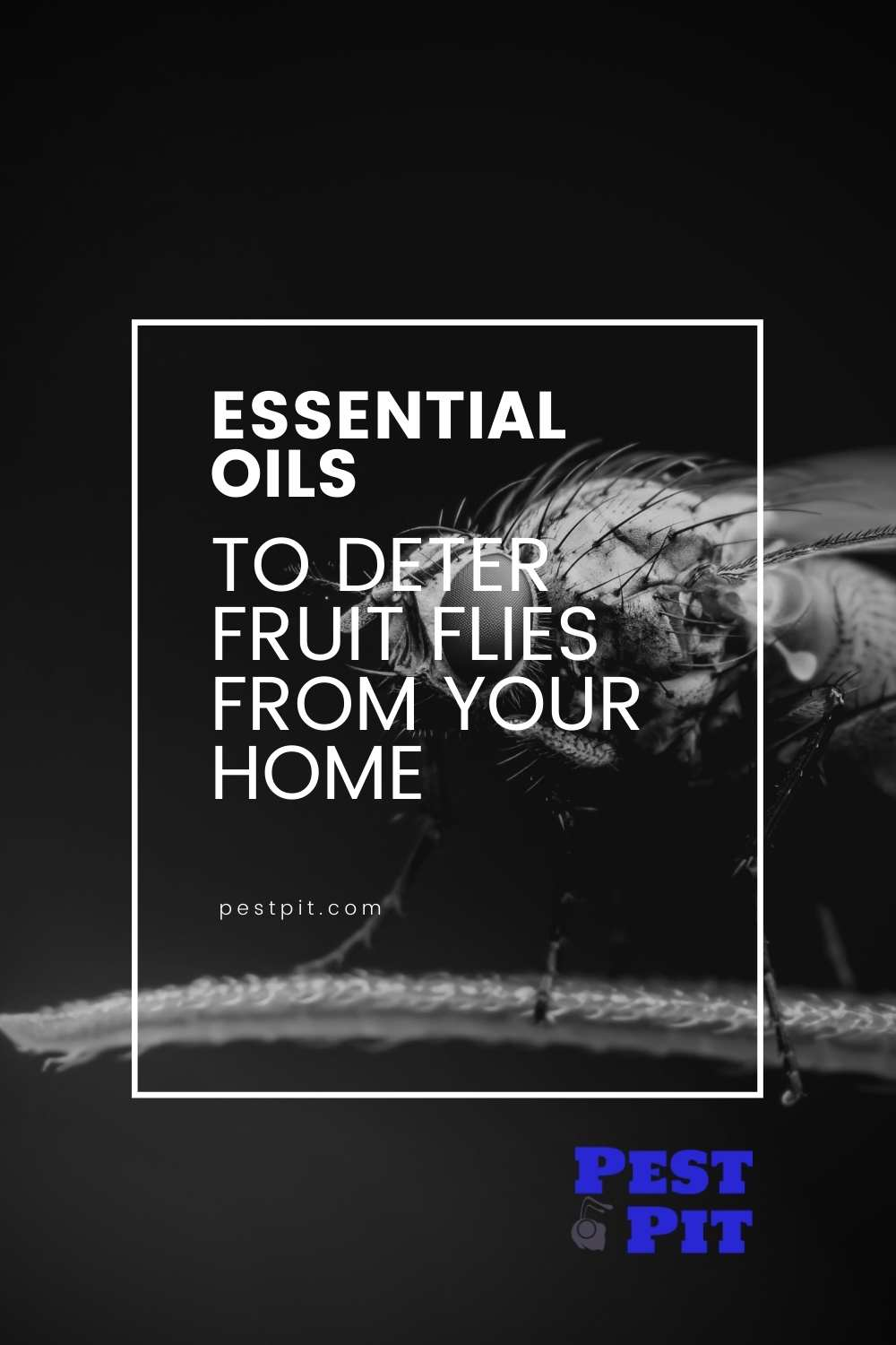 Essential Oils To Deter Fruit Flies From Your Home