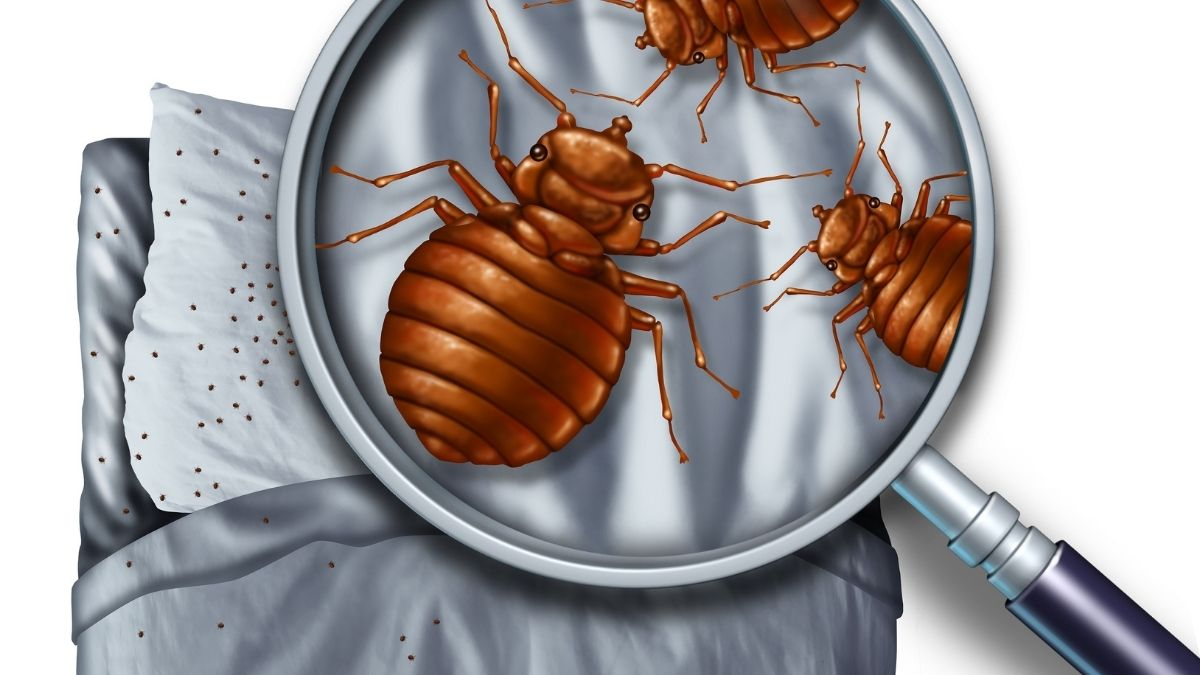 bugs found in beds