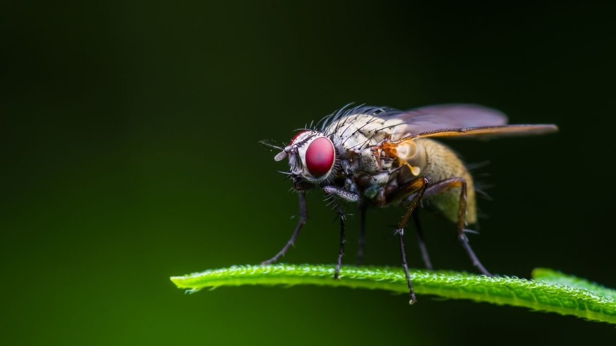 fruit fly on green plant