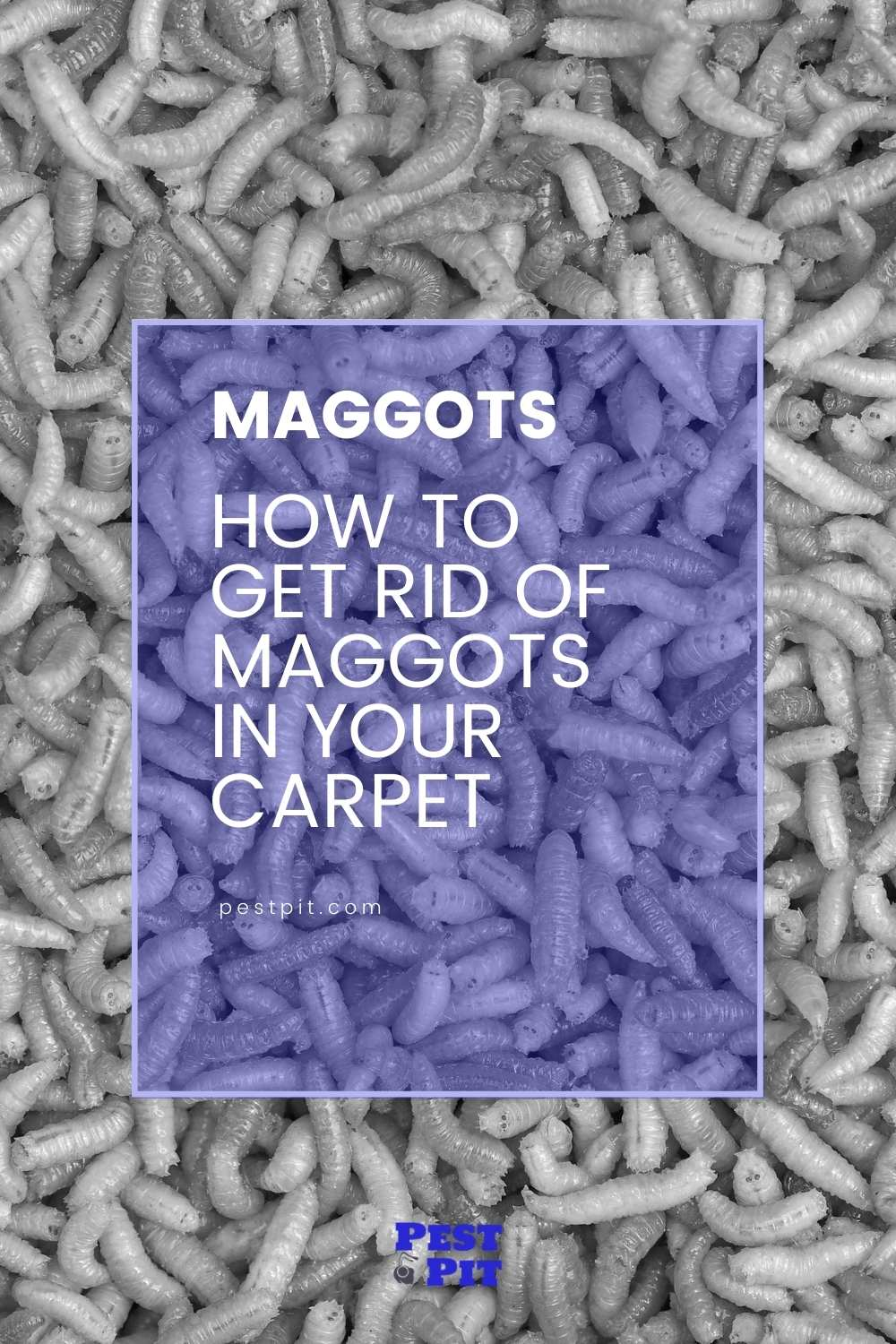 How To Get Rid Of Maggots In Your Carpet