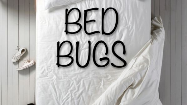 bed with the words bed bugs on in black