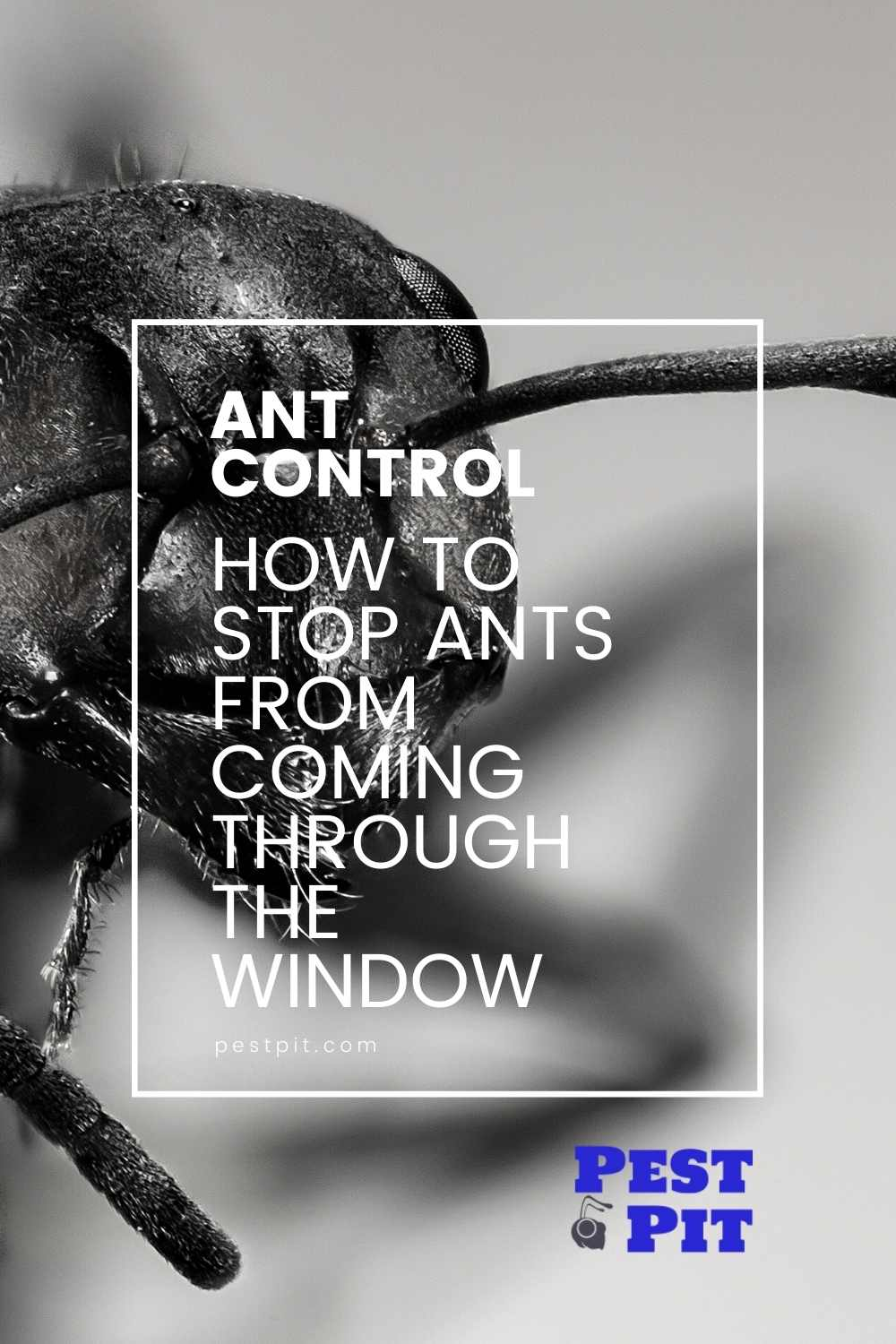 How To Stop Ants From Coming Through The Window