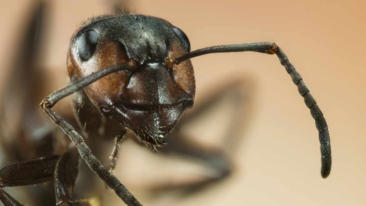 close up photo of ants head