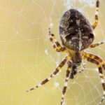 Does Bleach Kill Spiders? How Can I Use It For Spider Control?