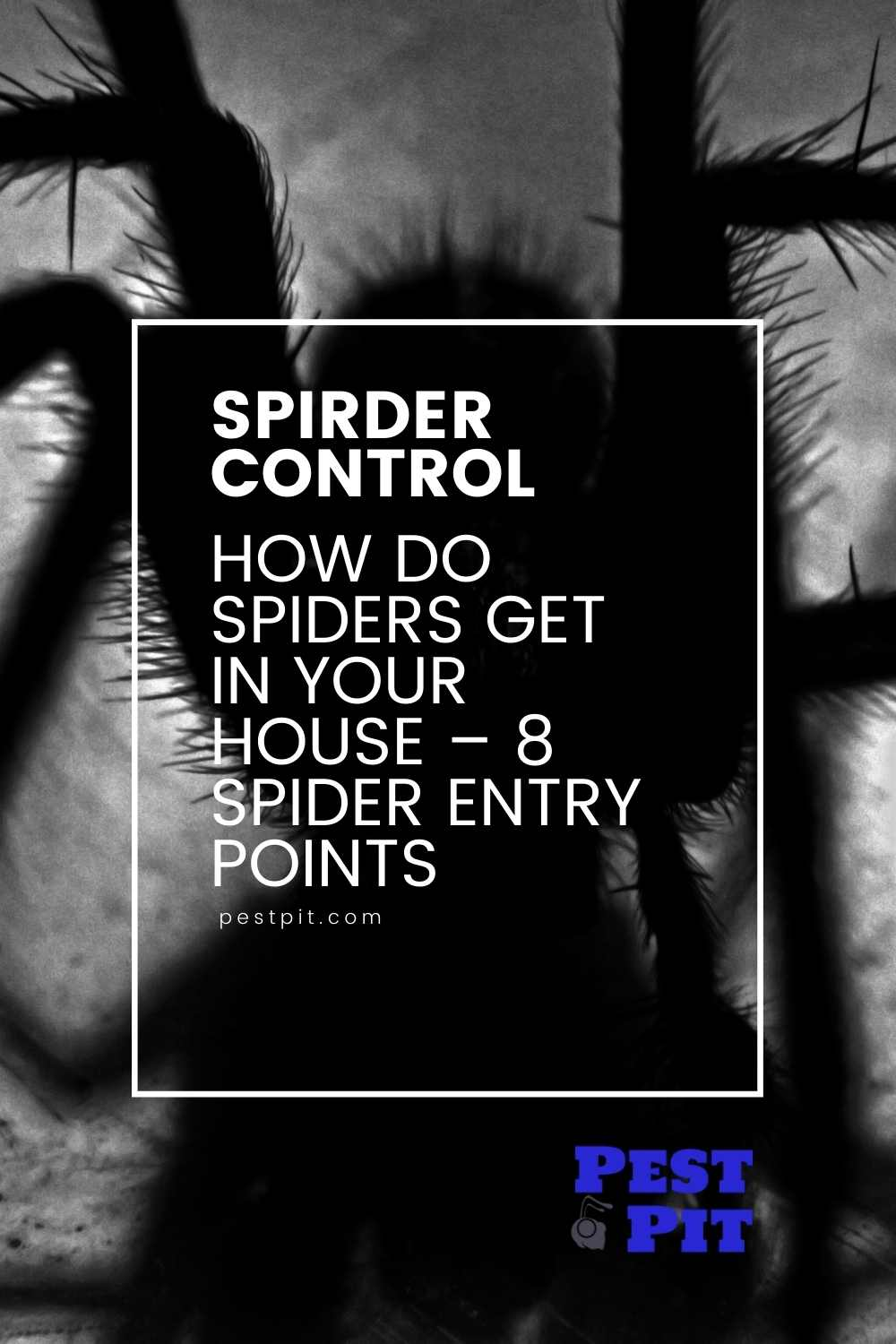 How Do Spiders Get In Your House – 8 Spider Entry Points