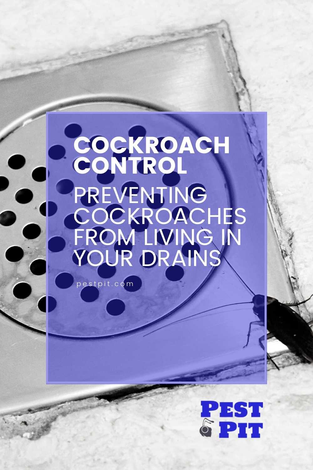 Preventing Cockroaches From Living In Your Drains