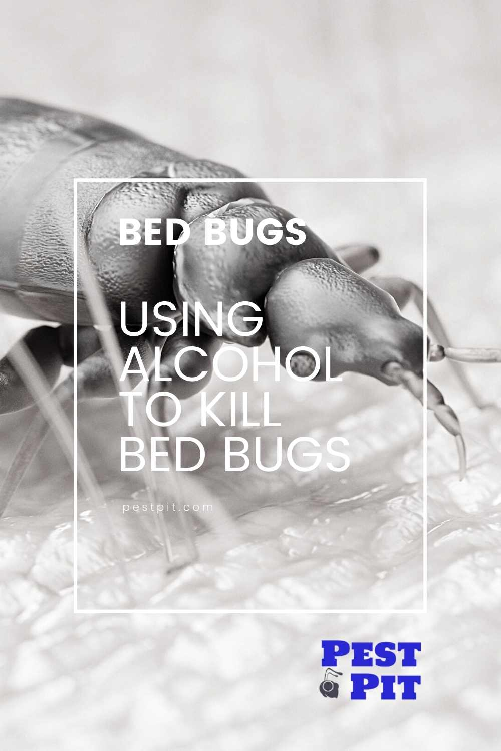 Using Alcohol To Kill Bed Bugs