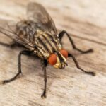 How Do Flies Get In The House When The Windows Are Closed?