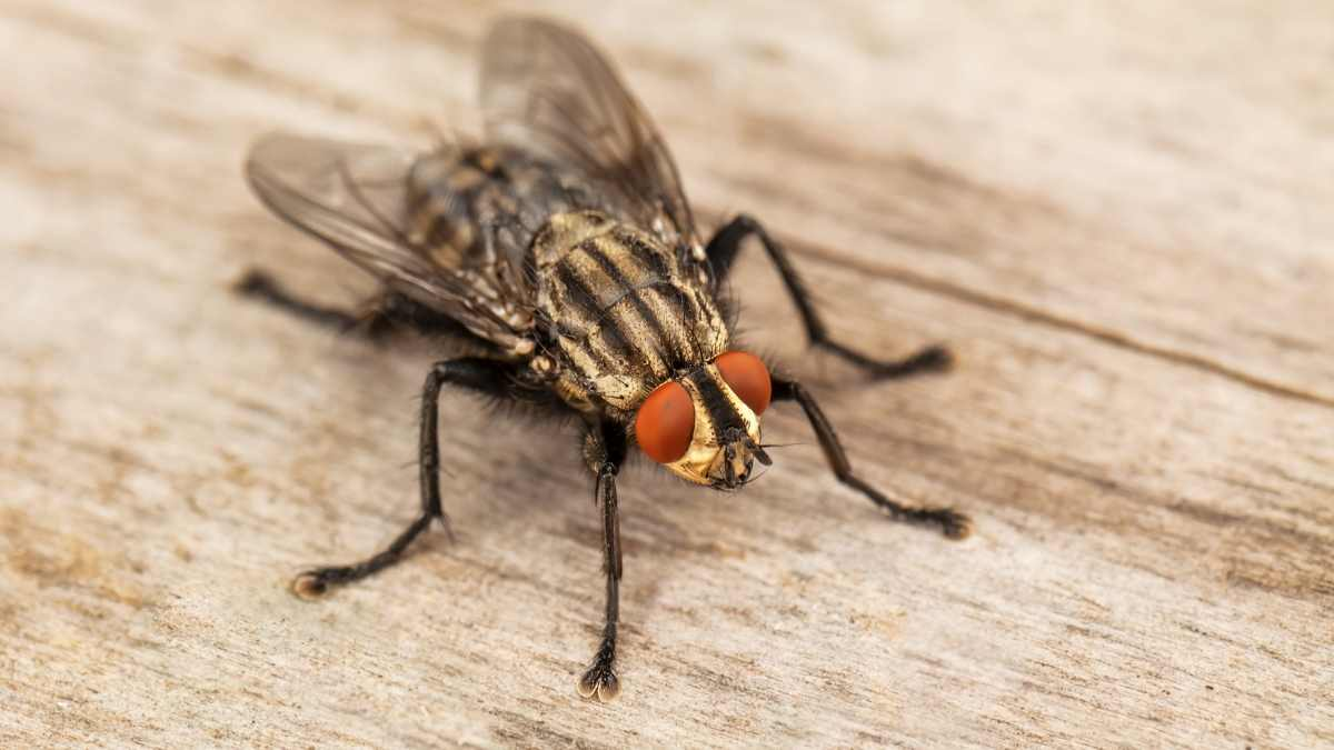 fly on a piece of wood in a house