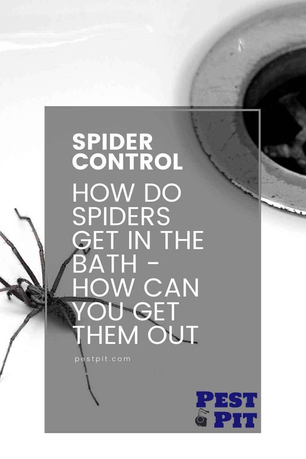 How Do Spiders Get In The Bath - How Can You Get Them Out