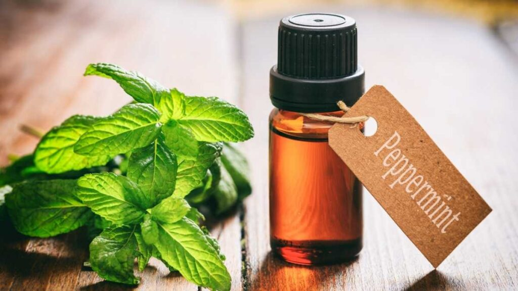 peppermint and oil
