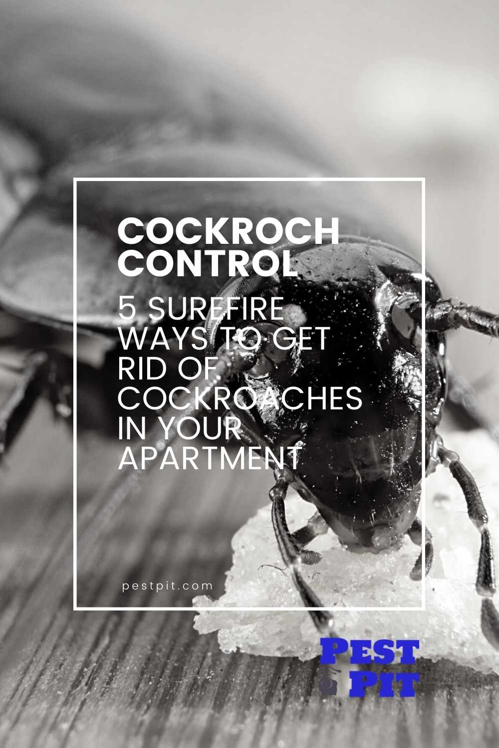 how to get rid of cockroaches in your apartment