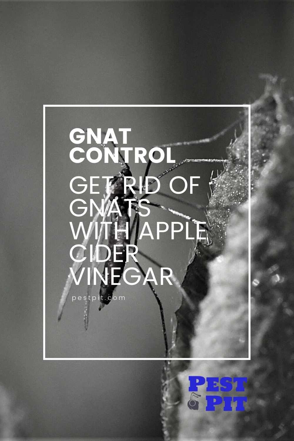 Get Rid of Gnats With Apple Cider Vinegar