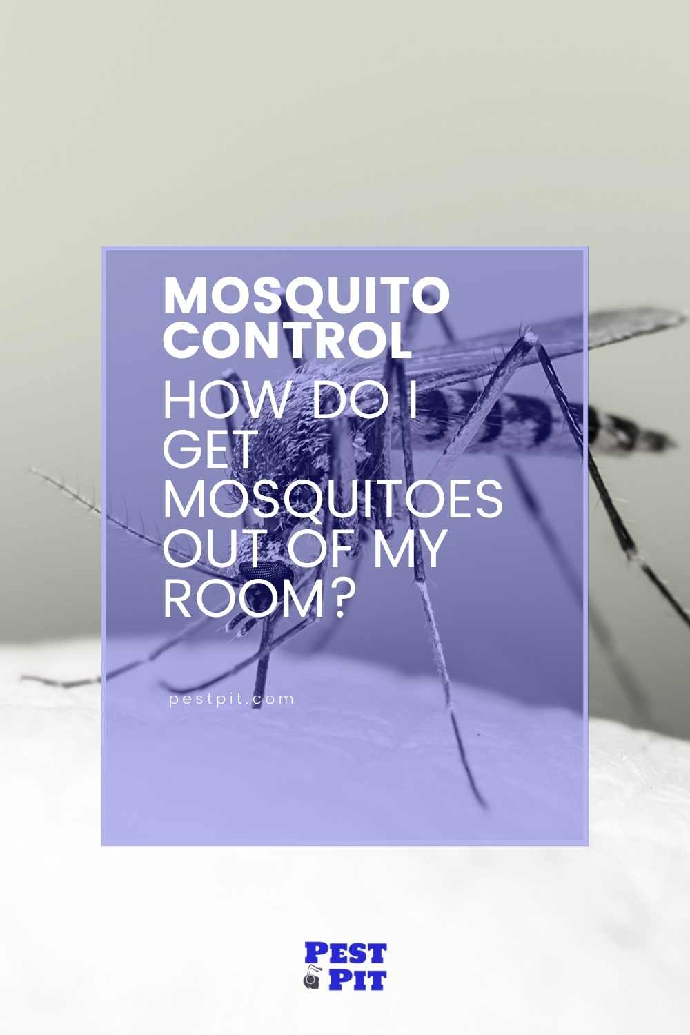 How Do I Get Mosquitoes Out Of My Room